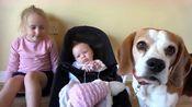 姐姐劳拉和比格猎犬查理照顾妹妹,贴心的姐姐和狗,画面真有爱