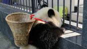 全球唯一不属于中国的大熊猫,再也无法回到祖国,原因令人心疼