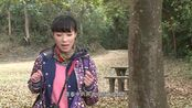 香港随便一棵树都是宝贝,香港人却一点不在乎,在大陆早被抢光了