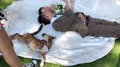 新郎新娘在拍婚纱照,遭到一只单身狗疯狂捣乱,咋这么搞笑