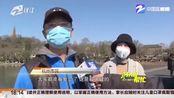 """春天到了! 杭州西湖边北山街的悬铃木要""""理个新发型"""""""