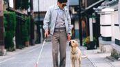 【双木】忠诚的狗狗跟随主人,退役后患白血病去世,4分钟看完感动全球的《导盲犬小Q》