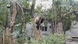 熊猫物语_熊猫冷笑话第41期 淼淼的独门绝技