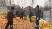 农村小伙存放70万斤玉米 却在开春降价时全部卖掉 听听能挣多少钱