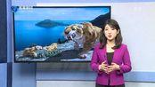 20190509-联合国报告发出严重警告:四分之一的物种面临灭绝
