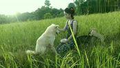 姑娘给大白喂吃的还得防着小狗,真是操碎了心!