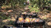 农村大哥种40多亩梨树,亩产达到20000斤,批发价是多少钱一斤?