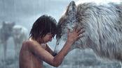 小毛孩在狼群中长大,黑豹与灰熊都是他的朋友,7岁智斗猛虎!