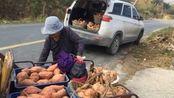 农民一次下几百斤红薯,存放到哪里?冬天到春天不坏?原来有窍门