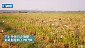 南昌:农田里全是!500多只鸭子离奇死亡 怀疑有人下毒