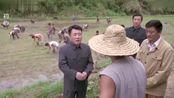 书记要求农民按尺寸插秧,怎知道甘将军大怒,直接把书记拉下田实验