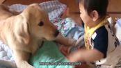 养狗可以降低患疾病的风险?这可不是谣言!科学家给出证明