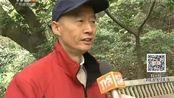 广州白云山:古墓遭破坏 惊现1.8米深大洞