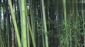 竹林里的大哥,用竹子纯手工制作的绝地求生三甲,网友:高手!