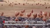 湖南省邵阳市双清区发生一起家禽H5N1亚型高致病性禽流感疫情。