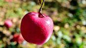 """糖尿病患者吃苹果升血糖还是降血糖?一定很重要,""""糖分""""含量低"""