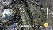 海昏侯大墓被发掘,从汉废帝刘贺的嘴中,竟发现刻字印章!