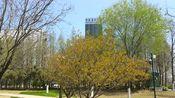 随拍江苏徐州新沂无锡工业园区内公园景色。您觉得美吗