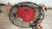 用电风扇外壳制作一个新型捕鼠器,一会就抓了一堆老鼠,发财了