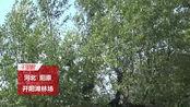 """【河北】奇特!张家口阳原""""树坚强""""独木成林"""