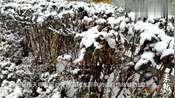 德州降雪持续,禹城、齐河将迎大雪!
