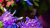 无锡市锡剧团:锡剧《惠山泥人》第七场片段 2019.10.5.-文化-高清完整正版视频在线观看-优酷