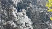 鄂西大山深处,发现一具棺材悬在山崖上,这是怎么弄上去的