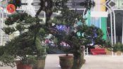 2020四川花卉(果类)生态旅游节分会场在宜宾市叙州区举行