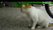搞笑猫咪www.hlsyb.com磁翻板液位计
