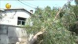 [第一时间-辽宁]阜新突降冰雹 至少3.6万亩农作物受灾 20130806