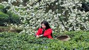 """安徽宣城的这个县是我国的""""绿茶之乡"""",有""""三省通衢""""之称"""