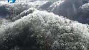 河南洛阳白云山景区三月桃花雪,雨凇变雪凇,画面宛若仙境