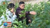 藁城区:科技大棚孕育农业希望