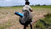 柬埔寨的一名男子, 利用汽车轮胎当陷阱, 轻松捉到三只肥鹌鹑