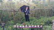 降央卓玛一曲《心中的雪莲》,轻若幽谷,美妙动听,真正的天籁!
