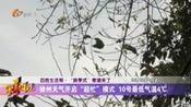 """徐州天气开启""""超忙""""模式 10号最低气温4℃"""