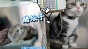 店猫来探望窝里横八,up惨遭毒打。小八:谁让你摸他了。up:能打我就是好了高兴