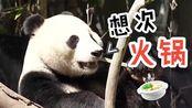 """旅美大熊猫母子回国!吃了美国23年""""快餐""""的国宝会胖若两人吗"""