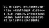 【拍客】上海市中心现20余亩油菜花田惹人醉