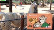 大连森林动物园年卡办理全过程 双人共花了620元 值了