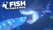 海底大乱斗 亚马逊鱼猥琐发育安稳狩猎 又被虎头鲨吃了