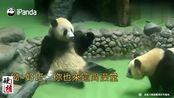 大熊猫:坐在浴池里的样子,简直就像一个人在蒸桑拿,萌出血!