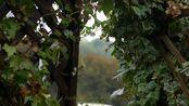 【环境音】3小时40分花园的雨声,时长满意,放松助眠,专注学习