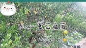 「薇安的日常vlog」和摩羯先生的橘园下午茶---象山有哪些好逛的小众