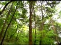 一枝梅[A.Branch.Of.Plum.Blossom][006][KO_CN]_3
