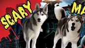 【Ms. Laika The Husky】恐怖面具