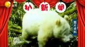 四川:全国首例白色大熊猫,出现在四川卧龙保护区