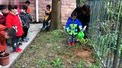 小小种植员-----桂林市天鹅湖艺术幼儿园幼儿植树活动