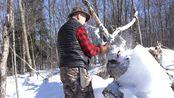 【野外的呼唤】教你制作桦木焦油,保存熊肉