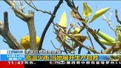 江西新余:高温少雨 当地展开生产自救